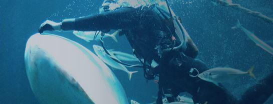 Top Attraktionerg Nordsøen Oceanarium