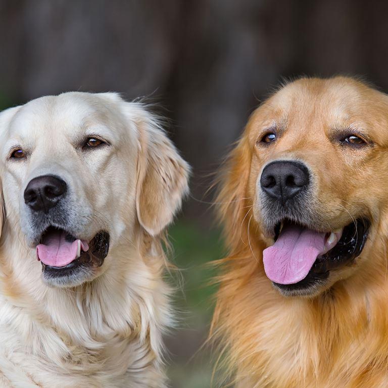 Hunde må medbringes på Bakken, så længe de holdes i snor!