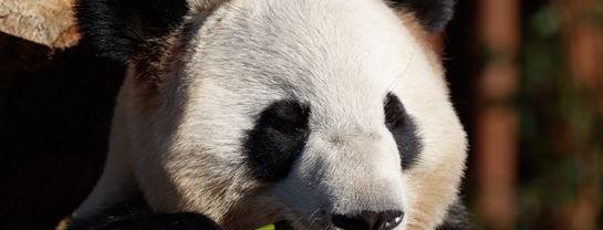TopAttraktioner KBH Zoo Koebenhavn