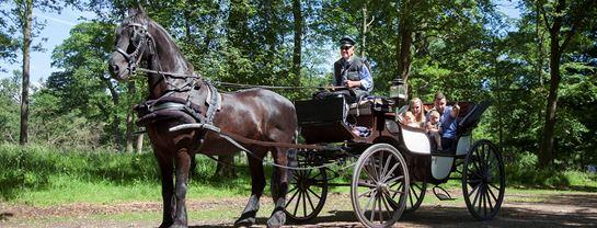 Familie Hestevogn Skov Traer.jpg